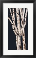 Framed Birch Tree II