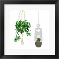 Hanging Plant Set II Framed Print