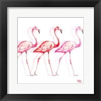 Flamingo Trio I Framed Print