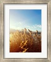 Framed Beach Grass
