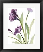 Framed Purple Belles I