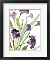 Purple Belles II Framed Print