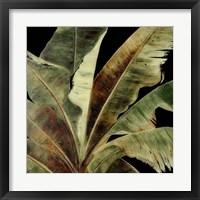 Uraba Palm on Black I Framed Print