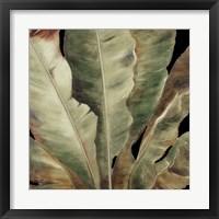 Uraba Palm on Black II Framed Print