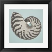 Noir Shell on Teal I Framed Print