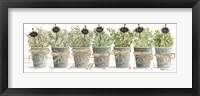 Framed Herbs in a Row