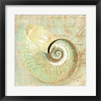 Framed Beach Nautilus I