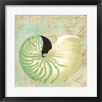 Framed Beach Nautilus II