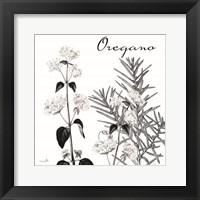 Framed Flowering Herbs Oregano