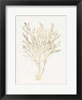 Framed Gilded Algae I
