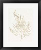 Framed Gilded Algae II
