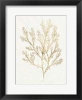 Framed Gilded Algae VI