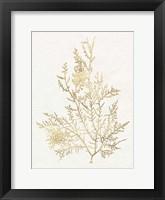 Framed Gilded Algae VIII
