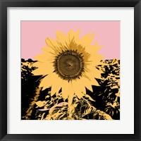 Pop Art Sunflower III Framed Print