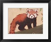 Red Panda I Framed Print