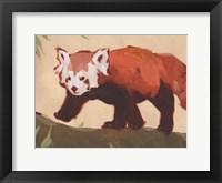 Red Panda II Framed Print