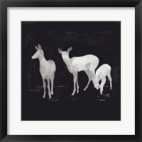 Sophisticated Whitetail II Framed Print