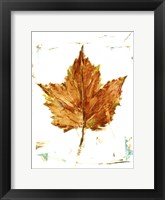 Autumn Leaf Study I Framed Print