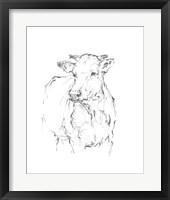 Bovine Quick Study II Framed Print