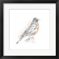 Robin Bird Sketch I Framed Print