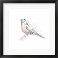 Robin Bird Sketch II Framed Print