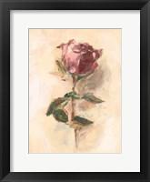 Painterly Rose Study I Framed Print