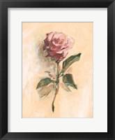 Painterly Rose Study II Framed Print