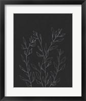 Simple Stalk I Framed Print