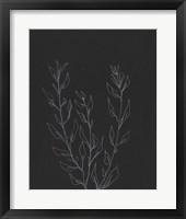 Simple Stalk II Framed Print