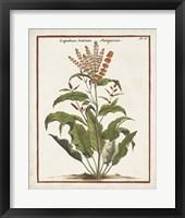 Munting Botanicals I Framed Print
