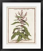 Munting Botanicals II Framed Print