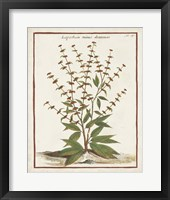 Munting Botanicals III Framed Print