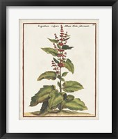 Munting Botanicals IV Framed Print