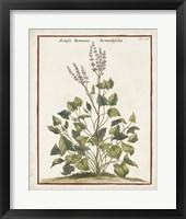 Munting Botanicals V Framed Print