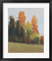 Fall Colors II Framed Print
