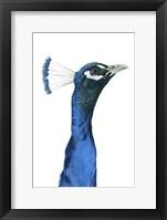 Framed Peacock Portrait I