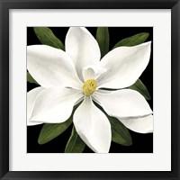Midnight Magnolia I Framed Print