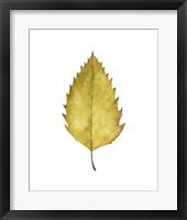 Fall Leaf Study I Framed Print