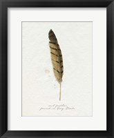 Found Feather III Framed Print