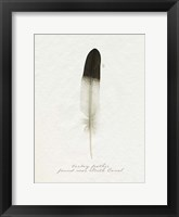 Found Feather IV Framed Print
