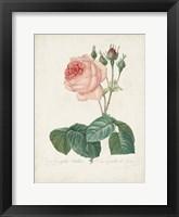 Vintage Redoute Roses I Framed Print