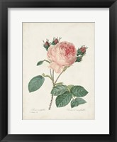 Vintage Redoute Roses V Framed Print