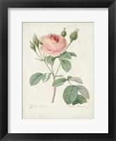 Vintage Redoute Roses VI Framed Print