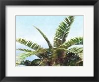 Pleasant Palms I Framed Print