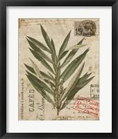 Vintage Nature's Greenery I Framed Print