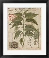 Vintage Nature's Greenery II Framed Print