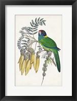 Tropical Bird & Flower II Framed Print