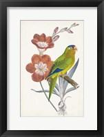 Tropical Bird & Flower III Framed Print