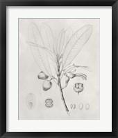 Vintage Leaves I Framed Print