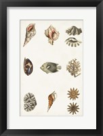 Antique Coastal Chart II Framed Print